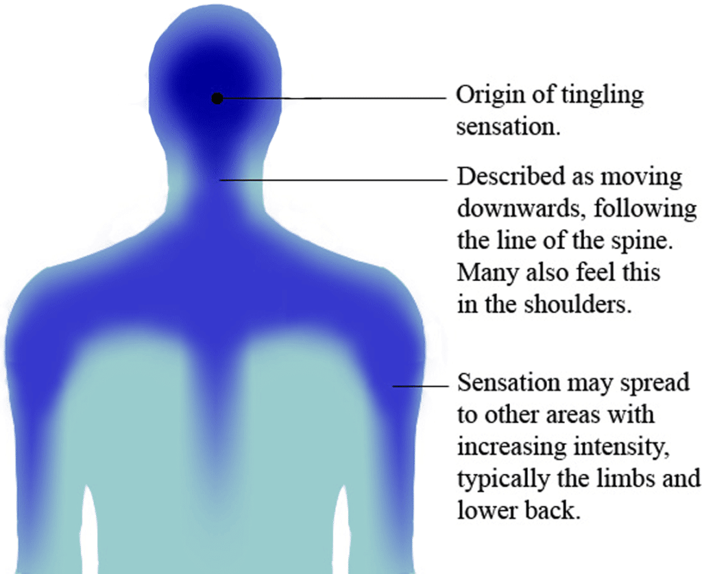 An illustration of the route of ASMR's tingling sensation. Image shows rear view of the head and upper torso. Capable individuals typically experience the sensation as originating at the back of the head, spreading across the scalp and down the back of the neck. Half of participants reported that this sensation typically spreads to the shoulders and back with increasing intensity. Though this diagram represents the most common areas involved in the tingling sensation, there is a huge amount of individual variation in where tingles spread to with increased intensity, with legs and arms also commonly reported as hotspots in some individuals.