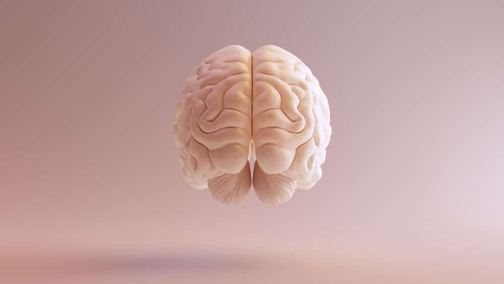 A model of a pink human brain against a pink background.