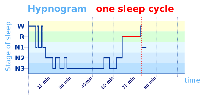A hypnogram showing a typical sleep cycle for an adult human.