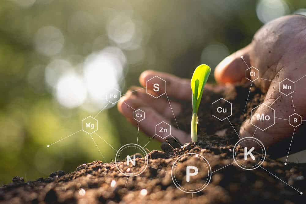 Corn seedlings are growing with the hands of the agricultural men, pouring the soil and having technology icons about the minerals of the plants around the soil.