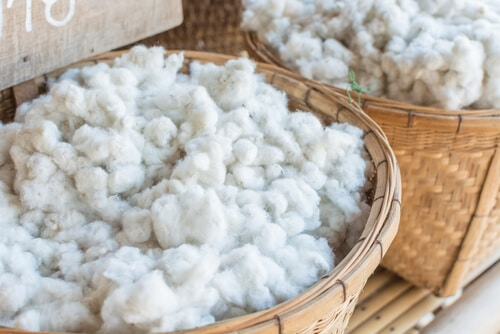 Process of making cotton : raw cotton