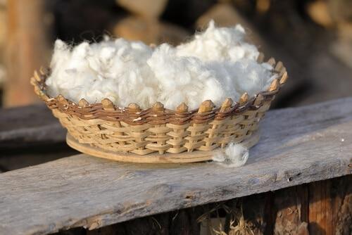 Basket of untreated sheep wool.