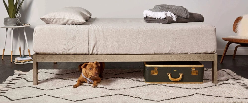 A dog sleeps under a Keetsa bed.